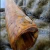 makowh-didgeridoo-16