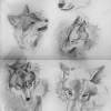 makowh-wolf-sketches-2