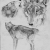 makowh-wolf-sketches